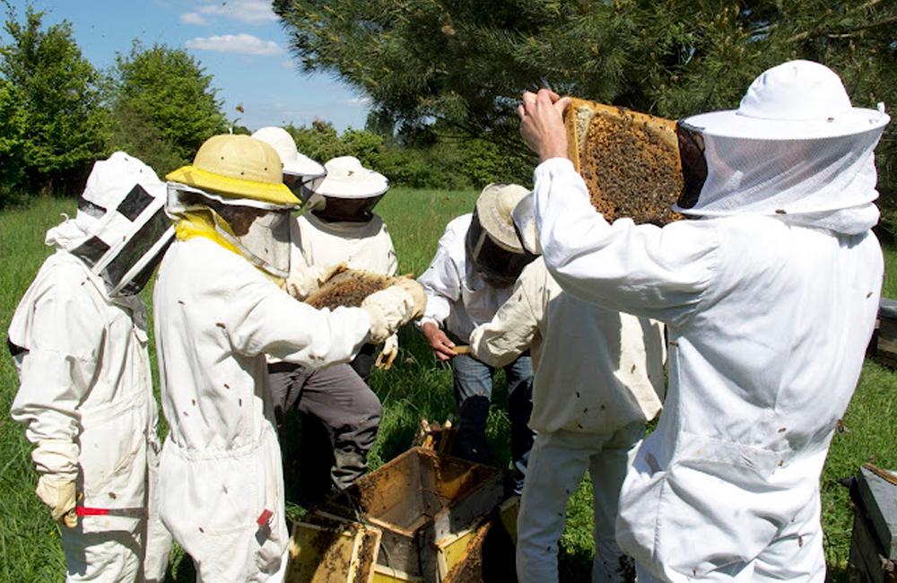 Animation miel et abeille Vendée